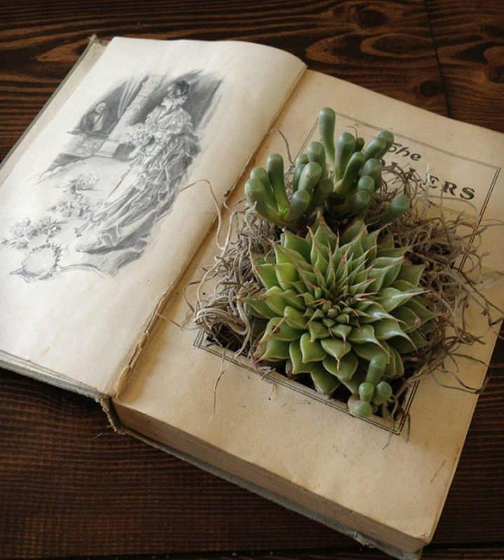Kitap Bonsai Saksısı