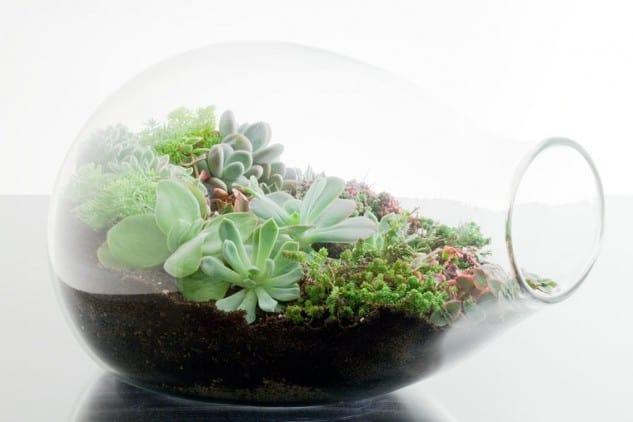 Evinize Yeşili Katacak 17 Terrarium Fikri (11)