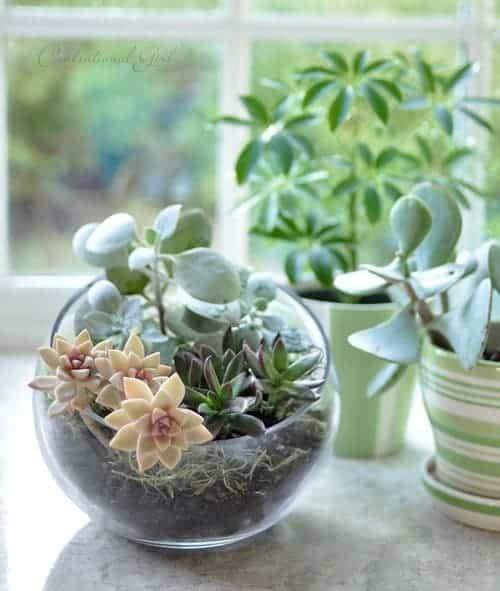 Evinize Yeşili Katacak 17 Terrarium Fikri (17)