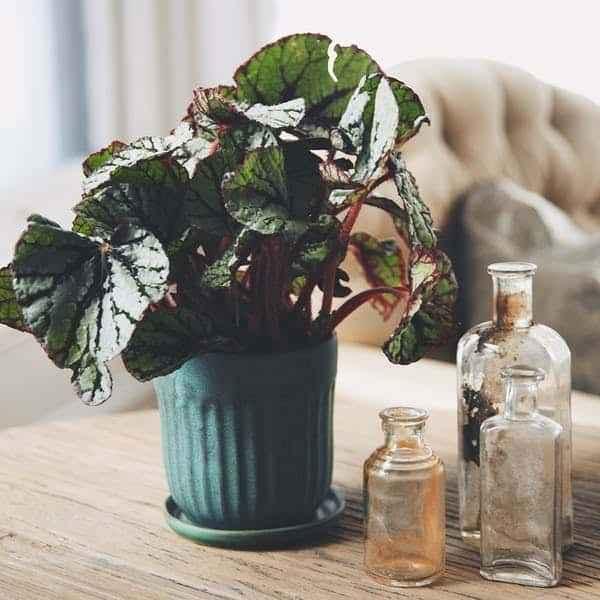 apartman dairesinde kolaylıkla yetiştirebileceğiniz 8 ev bitkisi